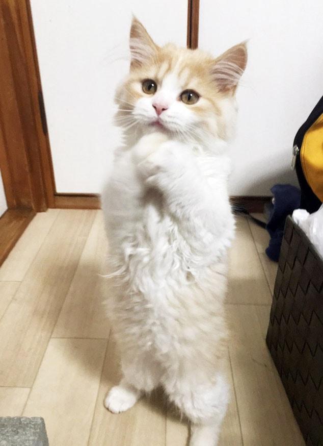 千葉 子猫 里親